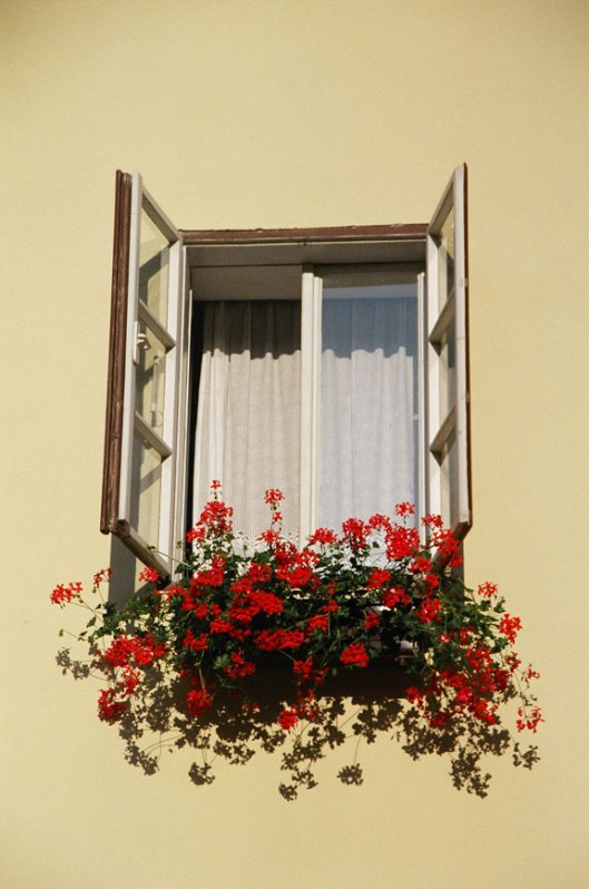 65590013-flowers_and_window