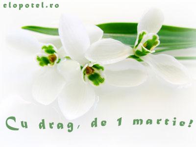 felicitare13