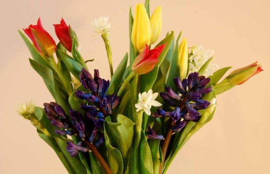 flowers-08-March-2012-003
